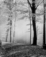 Herdern forest in fall (1)